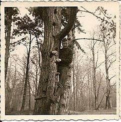 Sur l'arbre