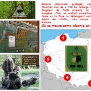 Où se trouvent cette réserve de bisons en Pologne ?