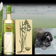 Dans la liste ci-dessous, quel nom vernaculaire n'est pas utilisé pour qualifier Hierochloe odorata, cette herbe qui parfume si agréablement la Zóbruwka ?